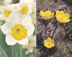 4 Cartes Doubles 13,5 X 8,5 Sur Le Thème Des Fleurs - B. Plantes Fleuries & Fleurs