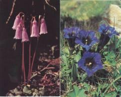 5 Cartes Doubles 13,5 X 8,5 Sur Le Thème Des Fleurs - B. Plantes Fleuries & Fleurs