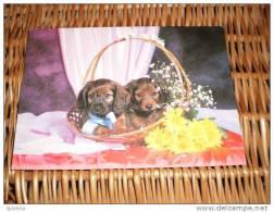 Hund Dog Postkarte Dackel Teckel Dachshund - Dogs
