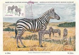 D09014 CARTE MAXIMUM CARD 1964 ROMANIA - ZEBRA CP MUSEUM ORIGINAL - Gibier