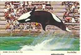 TEM169 - Sea World - Shamu - Orca - Delfini