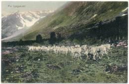 Fra Lyngseidet,  Lyngen (1909) - Norwegen