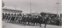 Défilé Des Troupes Militaires Marocaine  A Cheval Lors De La Colonisation Du Maroc  Casablanca - Guerra, Militares