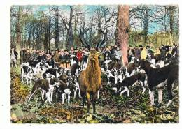 Chasse  En  Forêt   L'  Hallali  Sur Pied - Jagd