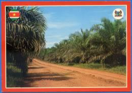 SURINAME - Oilpalm Plantation At Victoria (OBE Plantation) - Suriname