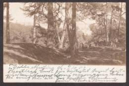 SN96) Villa Martin - Unique Real Photo Postcard - 1902 - Sweden