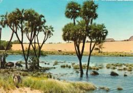 AFRIQUE EGYPTE -Nubia Nile View, Nubie Vue Près Du Nil ( Nubien) (timbre Décollé-Editions : KRUGER 749 / 20 )*PRIX FIXE - Egypt