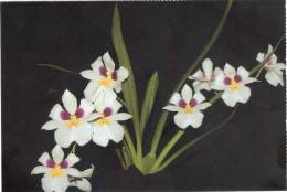 Lote PEP332, Colombia, Postal, Postcard, CFC, Orquidea, Miltoniopsis Roezlii, Orchid - Colombia