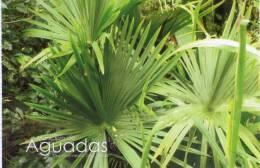 Lote PEP346, Colombia, Postal, Postcard, Caldas, Municipio De Aguadas, Palma De Iraca, Palm, Flora - Colombia