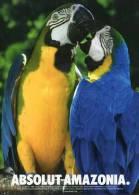 Lote PEP10,  Ecuador, Postal, Absolut Vodka,  Postcard, Macaw, Bird - Ecuador