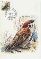 MC  BUZIN  Bird/ Oiseau  Moineau Friquet  / Ringmus / Passer Montanus / Tree Sparrow / Feldsperling  1989 - Spatzen