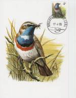 MC  BUZIN  Bird/ Oiseau  Gorgebleu à Miiroir Blanc  / Witgesternde Blauwborst / Cyanosylvia Sv. Svecica  1989 - Sperlingsvögel & Singvögel