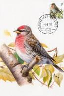 MC  BUZIN  Bird/ Oiseau  Sizerin Flammé  / Barmsijs / Carduelis Flammae/ Redpoll / Birkenzeisig   1992 - Sperlingsvögel & Singvögel
