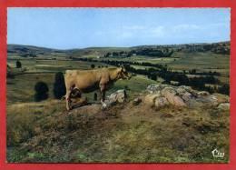 * AUBRAC-Paisible Tableau Lozérien(Vaches) - Ohne Zuordnung