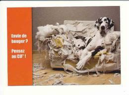 CP Pub Bon état / Chien Race Danois Sur Canapé - Humour Chien Dog Humor  / CP 5/240 - Publicité