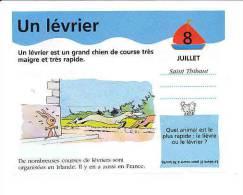 Humour / Un Lévrier ( Chien Dog Greyhound ) / Etalon Cheval  // BIM 69/3-F - Vieux Papiers