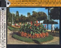 D1376 Lago Maggiore - Pallanza ( Verbania ) - Fiori, Fleurs, Flowers  / Viaggiata 1970 - Annullo Pallanza ( No ) - Other Cities