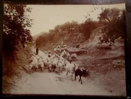 Ancienne PHOTO Originale Environs De CREST 26 Berger Troupeau De Brebis Route De Foire Vers 1900 - Profesiones