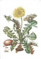 Löwenzahn Mit Wollfuss-Spinner (PRO INFIRMIS) - Fleurs, Plantes & Arbres