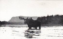 Parc Des Laurentides Québec - Moose In Water - Orignal Animal - Lorenzo Audet - Unused Neuve - 2 Scans - Animaux & Faune