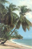 BARBADOS PALM TREES OVER THE SEA CARTE CIRCULEE A BUENOS AIRES L'ARGENTINE RARISIME CIRCULATION - Barbados