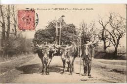 ENVIRONS DE PARTHENAY  -  ATTELAGE DE BOEUFS - Parthenay