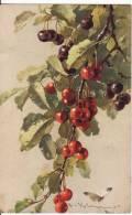Carte Postale Fantaisie - C.KLEIN - CERISES Rouges Et Noires+Papillon -Illustrateur- 2 SCANS - - Klein, Catharina