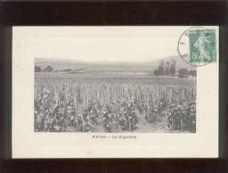 51 Avize Le Vignoble édit. I.P.M. Vigne Vin Champagne - France
