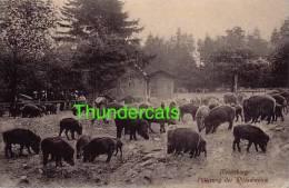 CPA COCHON SANGLIER  MORLITZBURG FUTTERUNG DER WILDSCHWEINE PIG - Cochons