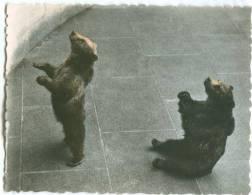 Switzerland, BERN, Am Barengraben, A La Fosse Aux Ours, At The Bear Pit, Mini Photo [12592] - Photography