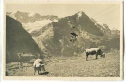 Switzerland, Bergbahn Grindelwald-First, Fiescherwand – Eiger – Jungfrau, Mini Photo[12628] - Photography