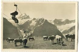 Switzerland, Bergbahn Grindelwald-First, Schreckhorn, Fiescherwand Mini Photo[12630] - Photography