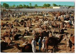 AFRICA LIBYA CAMELS MARKET FOTO AULA TRIPOLI OLD POSTCARD 1976. - Libya