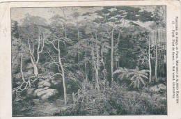 Belgian Congo Foret Pont De Lianes - Belgian Congo - Other