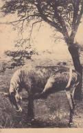 Belgian Congo Une Antilope Chaval - Belgian Congo - Other