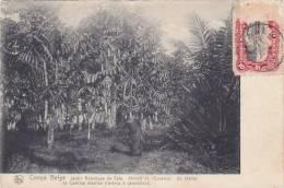 Belgian Congo Jardin Botanique De Eala 1912 - Belgian Congo - Other