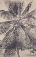 Belgian Congo Moanda An Omstreken Een Kokosboom 1925 - Belgisch-Congo - Varia