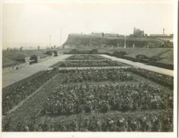 UK, The Rose Gardens, Whitby, Photo Snap-Shot [12699] - Other