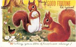 Ecureuil  (Red Squirrel) Et Rouge-Gorge - GOOD FORTUNE -1948- Illustrateur- Taylor - Taylor