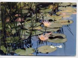 TCHAD--Un Peu D´eau Suffit Pour Que Fleurisse Le Désert (fleur),cpm N° 9  éd Courrier De Langogne - Ciad