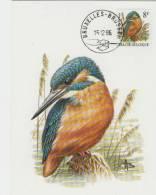 MC  BUZIN  Bird/ Oiseau  Martin-Pêcheur / Ijsvogel / Alcedo Atthis / Kingfisher / Eisvogel   1986 - Sperlingsvögel & Singvögel