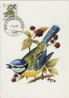MC  BUZIN  Bird / Oiseau  Mésange Bleu / Pimpelmees / Parus Caerulus / Blue Tit / Blaumeise   1987 - Sperlingsvögel & Singvögel