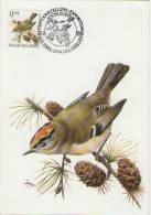 MC BUZIN  Bird / Oiseau  Roitelet Huppé / Goudhaantje / Regulus Regulus / Goldcrest  / Wintergoldhähnchen   1991 - Sperlingsvögel & Singvögel