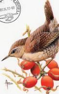 MC BUZIN  Bird / Oiseau  Troglodyte Mignon / Winterkoning / Troglodytes Troglodytes / Wren /  Zaunkönig   1992 - Sperlingsvögel & Singvögel