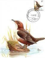 MC BUZIN  Bird / Oiseau  Cincle Plongeur / Waterspreeuw / Cinclus Cinclus / Dipper /  Wasseramsel   1992 - Sperlingsvögel & Singvögel
