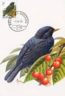 MC BUZIN  Bird / Oiseau  Merle Noir / Merel / Turdus Merula / Blackbird / Amsel    1992 - Sperlingsvögel & Singvögel