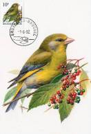 MC BUZIN  Bird / Oiseau  Verdier / Groenling / Carduelis Chloris / Greenfinch / Grünfink   1992 - Sperlingsvögel & Singvögel