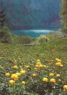 Seelisberg , Ankebälli: PRO INFIRMIS - Fleurs, Plantes & Arbres