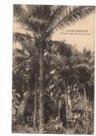 C  P  A ----- GUINEE FRANCAISE------un Noir Tirant Du Vin De Palme---voir 2 Scans - Französisch-Guinea
