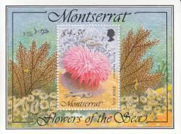 Montserrat MNH Scott #859 Souvenir Sheet $4.50 Sea Rose - Anemone Tealia - Flowers Of The Sea - Montserrat